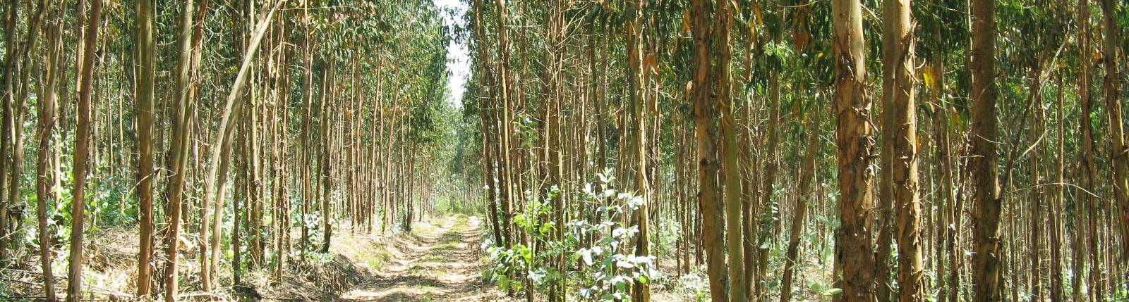 Caminhos transitáveis, floresta verde e pessoas seguras.